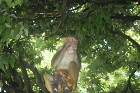 The Holy Monkeys Of Nepal's 'Monkey Temple' Captured photo in kathmandu nepal