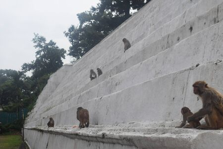 The Holy Monkeys Of Nepal's 'Monkey Temple' Captured photo in kathmandu nepal