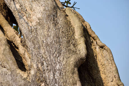 tree trunk on the forest
