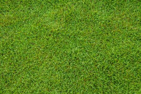 Green grass seamless texture is fresh photo