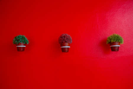 flowerpots: grass in flowerpots on the red background Stock Photo