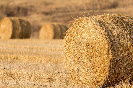 hayroll: Straw bales at sunset