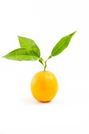 one object: Fresh orange isolated with leafs on white background. One Object. No People.