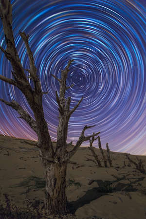 Beautiful sky at night with star trails and a dead tree in a dune. Valdevaqueros, Tarifa, Andalusia, Spain.