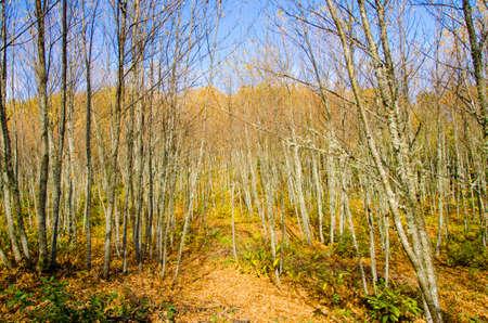 arrives: Typical Mediterranean landscape mountain When autumn arrives Stock Photo