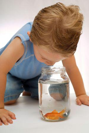 Toddler boy looking at goldfish in jar or bowl. Stock Photo - 3019152