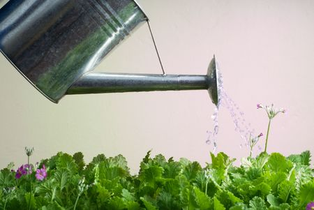 stainless steel: Stainless Steel Watering Can utilizzati per fiori d'acqua