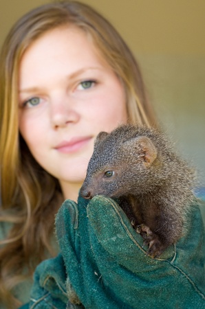 HOWICK - 26 FEBRUARY 2013: A juvenile grey mongoose rescued from the African muti trade is held by AFS volunteer Kim Claes at the FreeMe wildlife centre near Howick, South Africa, 26 February, 2013.