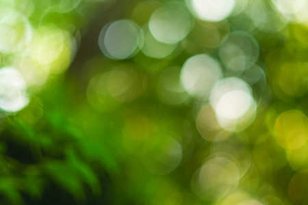 Out of focus round bokeh nature forest trees background design
