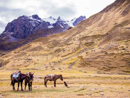 馬・ ハイキングのスタートでは、ペルーのアンデス山脈で待っている犬。