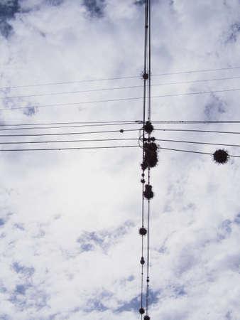 ペルー内の電話または電源ラインにとげのある空気植物