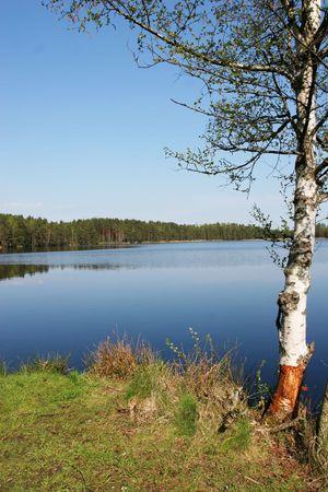 Beautiful lake at summertime (Latvia) Stock Photo