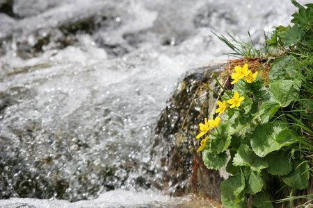 First spring flowers near the river (High Tatra, Slovakia) Stock Photo