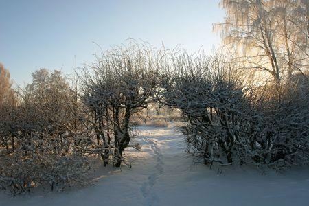 Winter landscape at the dusk (Latvia)