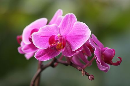 Beautiful pink orchid flowers  Stock Photo