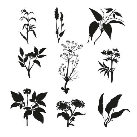 smothered: Silhouette of a plant herbarium . Graphic design-vector illustration. Illustration