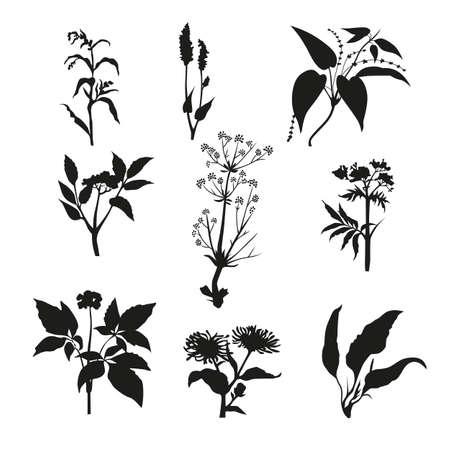 Silhouette of a plant herbarium . Graphic design-vector illustration. Illustration