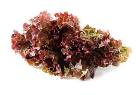 Red leaf lettuce salad for healthy on white background