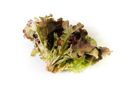 Red leaf lettuce nontoxic for healthy on white background Stock Photo