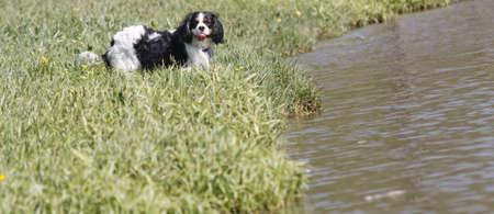 muffle: portrait of dog Stock Photo