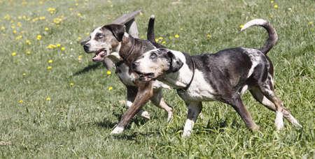 muffle: running dogs
