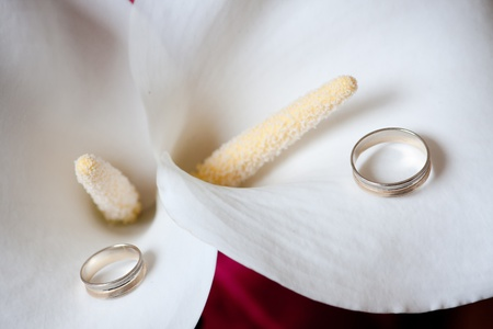 Wedding rings jewelry on beautiful and sensual white Calla flower photo