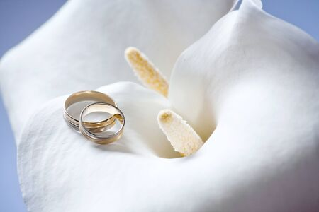 Wedding rings jewelry on beautiful and sensual white Calla flower