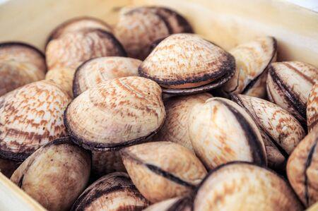 Raw food, Chamelea gallina sea shells