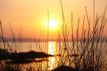 Sunset on the sea through the grass close up