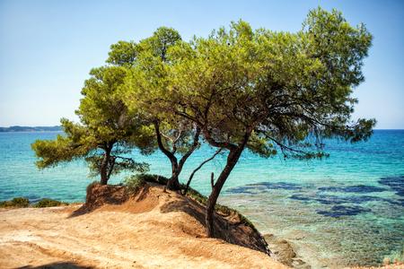 Beautiful summer coast, blue sea and pine trees