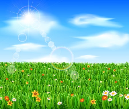 blue green background: Nature background with green grass and flowers and blue sky
