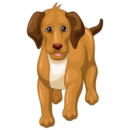 silly: Cartoon dog isolated on white background Illustration