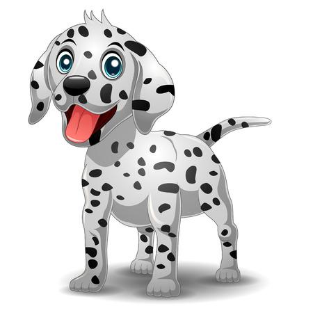 dalmatian: Cute Dalmatian Dog