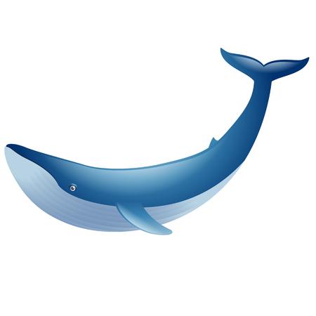 cachalot: Blue whale marine mammal Illustration