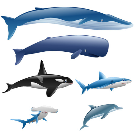 Set marine mammals. Blue whale, sperm whale, dolphin, orca Illustration