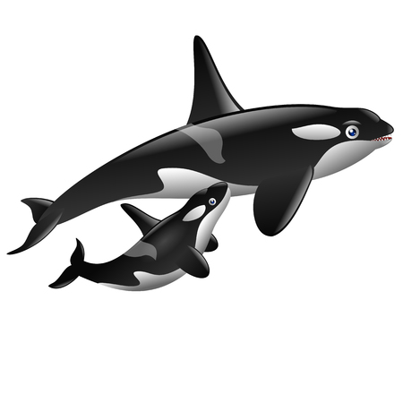 a pair of cute killer whales
