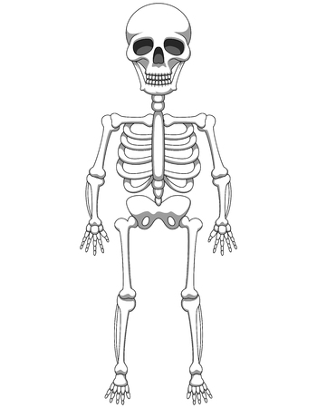 Cartoon skeleton mascot or Halloween character isolated on white background. Vector illustration