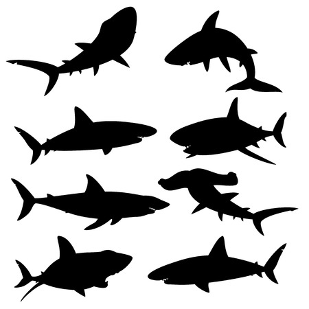 Set of silhouettes sharks on a white background. Vector illustration