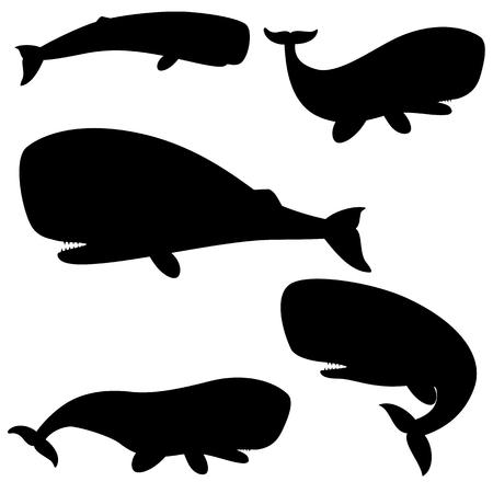 Set of silhouettes sperm whale on a white background. Vector illustration
