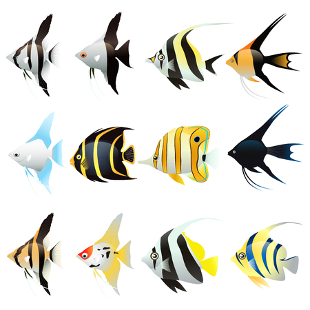 Set of angel fish Cartoon isolated on white background. Vector illustration