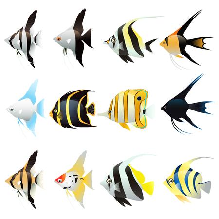 Ensemble de dessin animé poisson ange isolé sur fond blanc. Illustration vectorielle