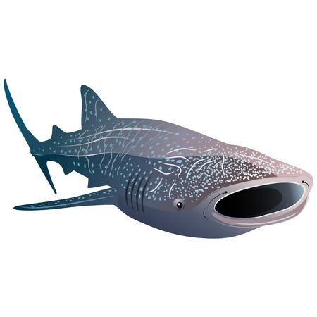Requin-baleine de dessin animé isolé sur fond blanc. Illustration vectorielle