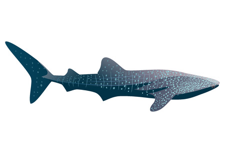 Cartoon whale shark isolated on white background. Vector illustration Illustration