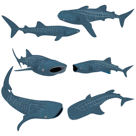 Set of Cartoon whale shark isolated on white background. Vector illustration