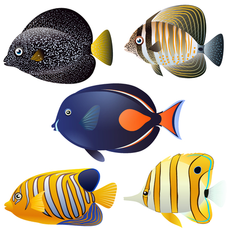 A set of exotic fish isolated on white background. Vector cartoon close-up illustration. Stock Illustratie