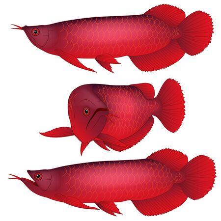 red arowana fish, mono line logo Designs Inspiration Isolate (687902)    Logos   Design Bundles