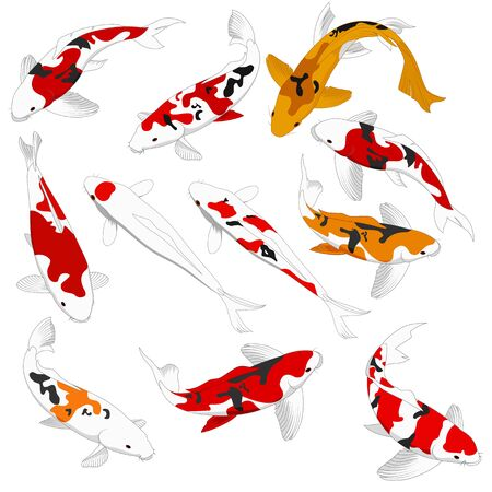 Elementi di design di pesci koi rossi e dorati
