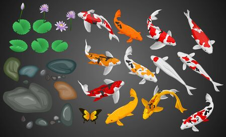 Carps koi fish underwater pond illustration