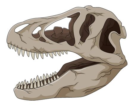 Tyrannosaurus rex dinosaur skull isolated on white background. Images for logo, label, emblem. Vector illustration 일러스트