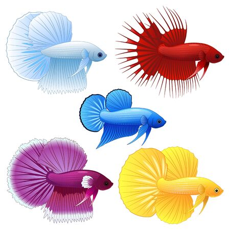 Illustration of cute cartoon betta fish Иллюстрация